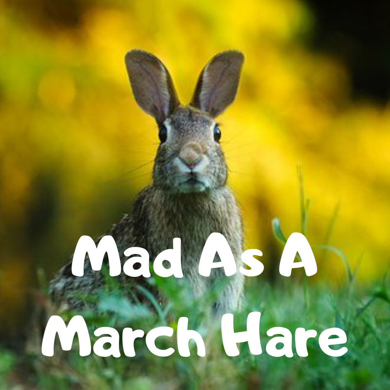 Mad As A March Hare