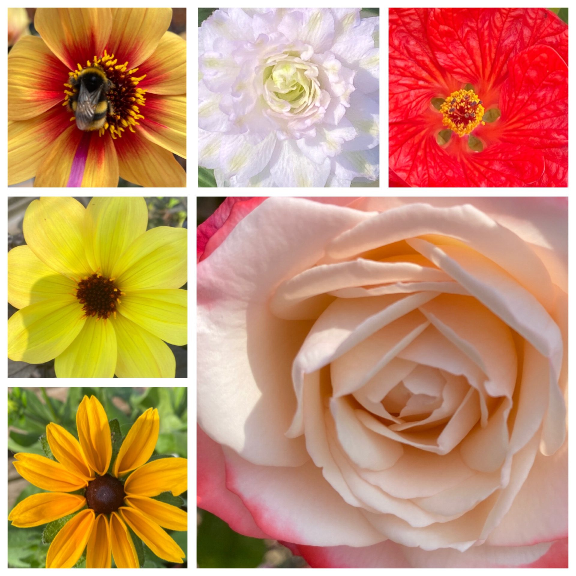Flower colour meanings.